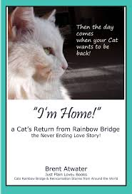 cat loss poems and quotes quotesgram