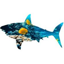 Shark Wall Decal Wayfair