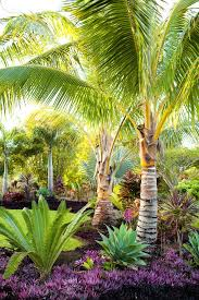 palm tree bedding landscape tropical