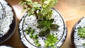 pretty succulent terrarium