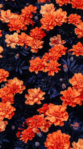 wallpaper orange flowers flower garden