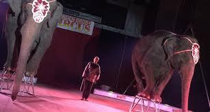 garden family circuses animal rights