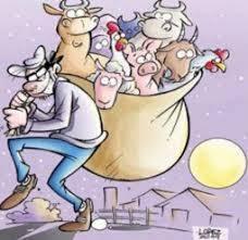 Ação de criminosos que atuam em furto de gado é interceptada por ...