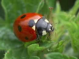 Image result for bug hunt