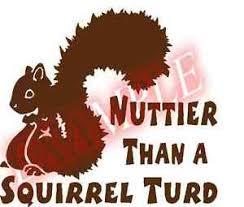 Pick Color Size Vinyl Decal Nuttier Than A Squirrel Turd Sticker Window Glass Ebay