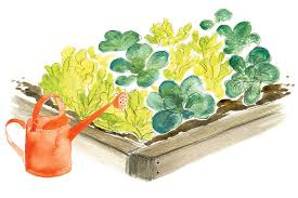 tips for growing a vegetable garden for