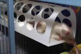 bag dispenser rat hammock petdiys