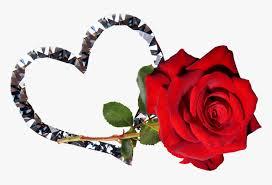 rose red flower valentine romantic