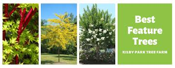 evergreen feature trees