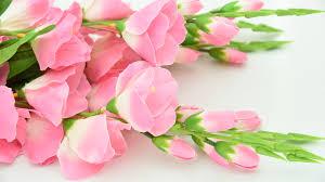 beautiful flowers bloom blooming