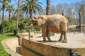 Barcelona Zoo - Tourist Information