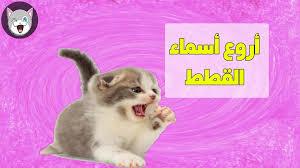 اسماء قطط 2020 عربية واجنبية جديدة موقع محتوى