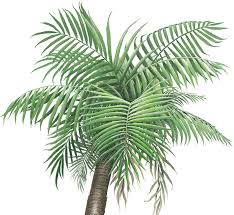 Palm Tree Wall Decals Ocean Wall Decals Tropical Wall Decals