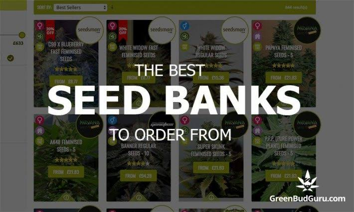 Image result for How To Choose An Online Seed Bank?""