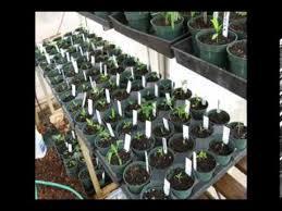 organic aquaponic garden
