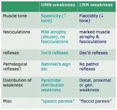 upper motor neuron vs lower motor