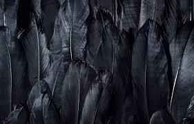 wallpaper dark black feathers