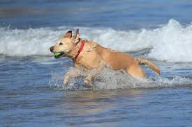 All the places you can no longer take your dog as summer beach ban ...