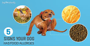 5 signs your dog has food allergies