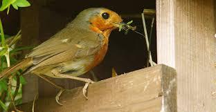 birds in the garden 10 proven tips to