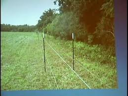 Feral Pigs And Deer Controlled With Mega Fence Richard Petcher Ext Agronomist Alabama Youtube