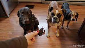 dehydrated en liver dog treats