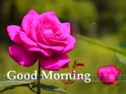 good morning love flowers archives