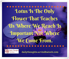 lotus is the only flower that teaches us daily thought image