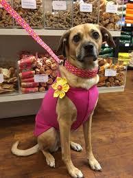Purrfect Pet Accessory Shop, Tasty Pet Treat Spot: Hairy Winston ...