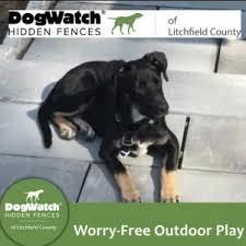 Community Blog Dogwatch Of Litchfield County Litchfield County