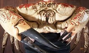 Monster Tasmanian King Crabs are saved ...
