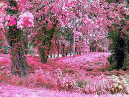 beautiful rose garden flower wallpaper