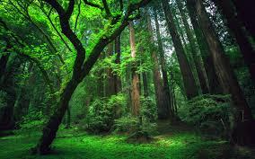forest hd wallpaper desktop h806538