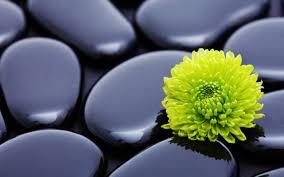flowers stones zen wallpapers hd