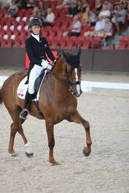 Equestrian Life - Gallery - 2020/02/23 Dressage by the Sea