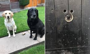 Birmingham Man Cuts Peep Holes In Gate So Dogs Can Spy On Neighbours Daily Mail Online