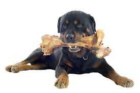 bone broth for dogs simply for dogs
