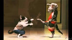لقطات مضحكة عن القطط لم يسبق له مثيل الصور Tier3 Xyz