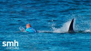 Surfer Mick Fanning attacked by shark ...