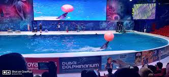 dubai dolphinarium klook