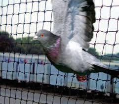 Https Bird X Com Wp Content Uploads Bird X Catalog All Pdf