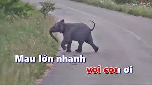 Karaoke Chú voi Con - Bài hát thiếu nhi - Nhạc thiếu nhi sôi động ...