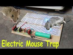 mouse trap 2020 you
