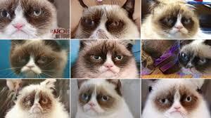 Grumpy Cat is dead, but will live on through AI - CNN