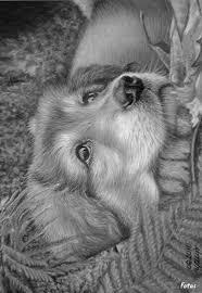 Pin Van Bianca Oranje Op Honden Met Afbeeldingen Dieren