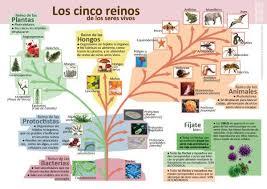 Infografías de Ciencias Naturales | Ciencias naturales, Clasificacion de  seres vivos, Ciencia natural