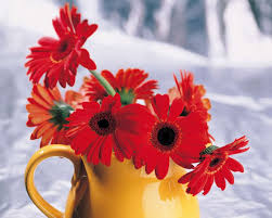 زهور جميلة صور جديدة لاجمل زهور في العالم رمزيات