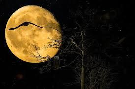 Bildergebnis für Eulenwald nacht pixabay
