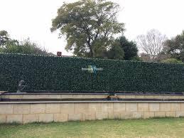 After Colorbond Fence After Artificial Ivy Hedge Panels Were Installed Designer Plants
