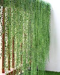 Charming Hanging Plants Ideas To Brighten Your Patio Screen Plants Balcony Plants Hanging Plants Indoor